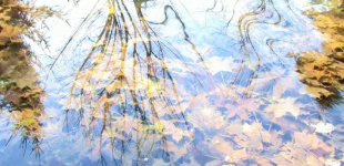Lingua Aqua: ambience i